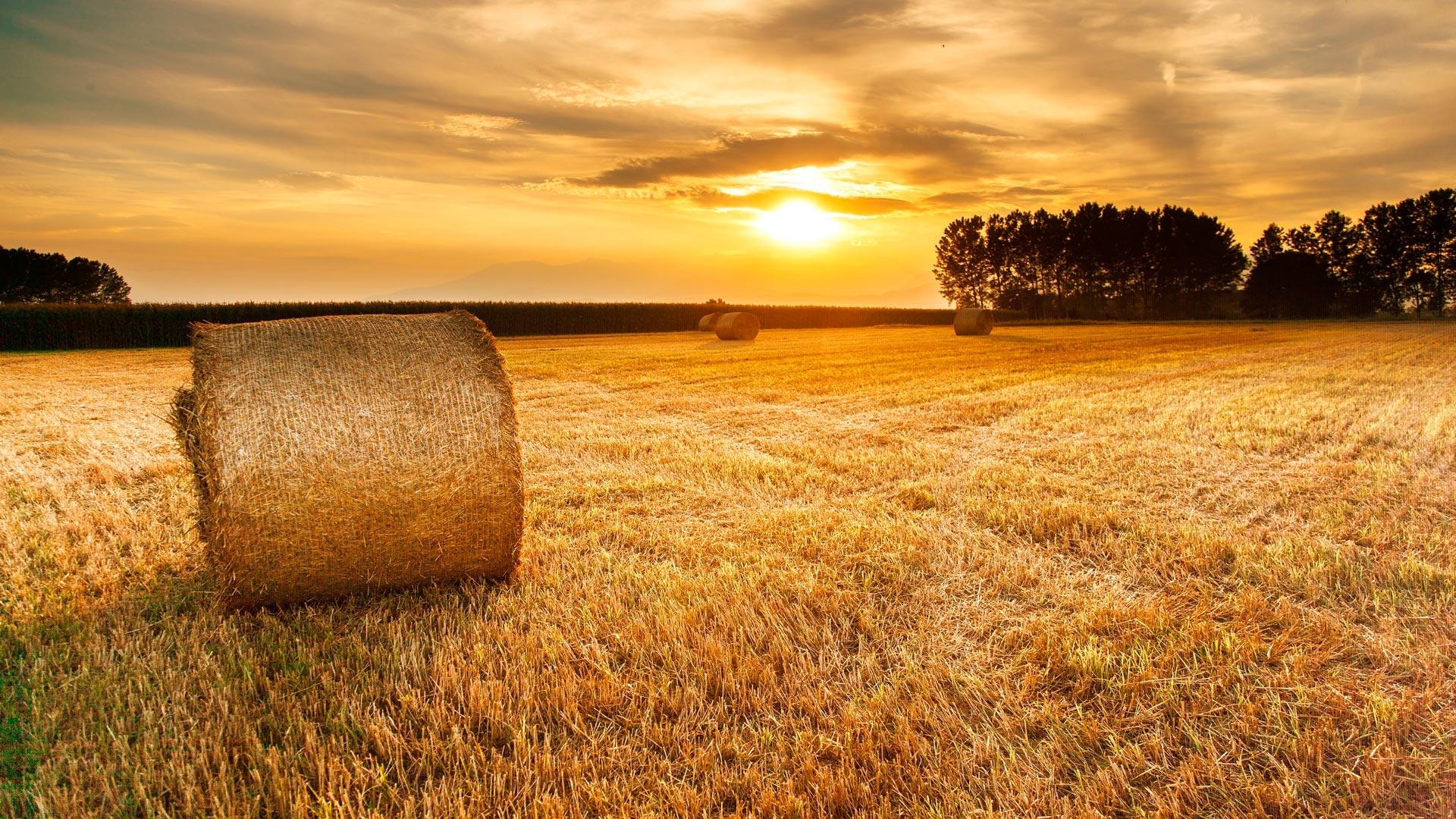 Per gli agricoltori statunitensi, la canapa è la via d'uscita