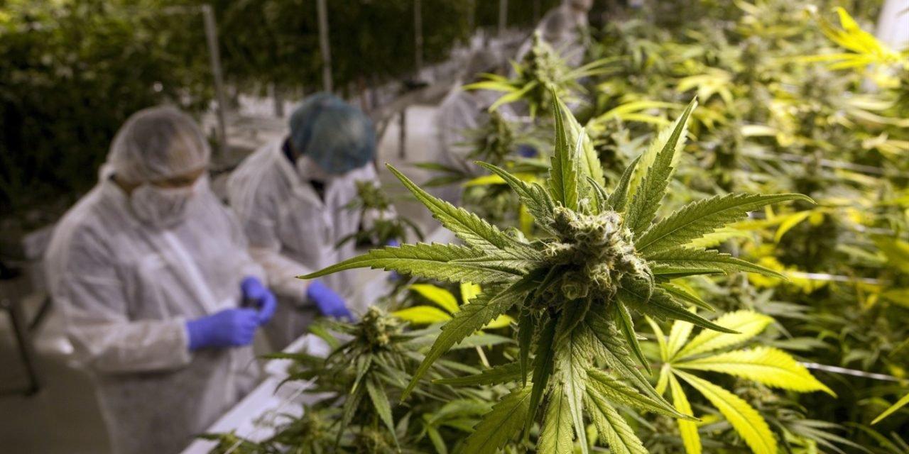 Curarsi con la cannabis adesso si può