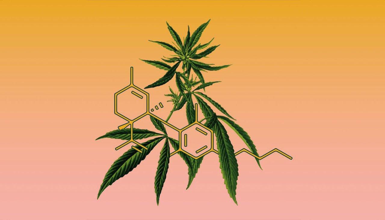 Cannabis: scoperta piantagione da 120 mila euro