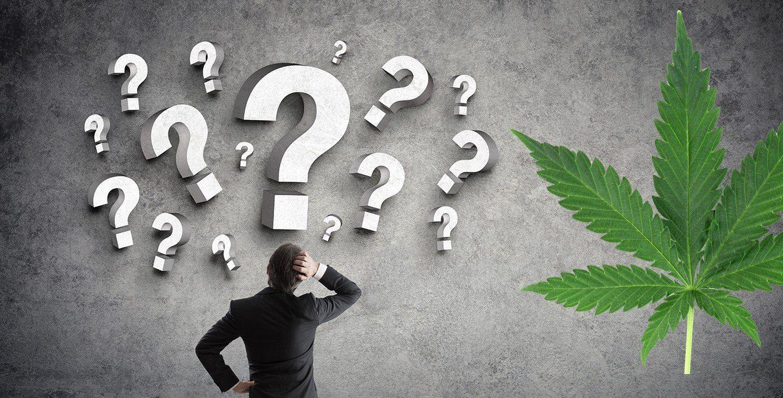 Cannabis terapeutica: dieci cose da sapere