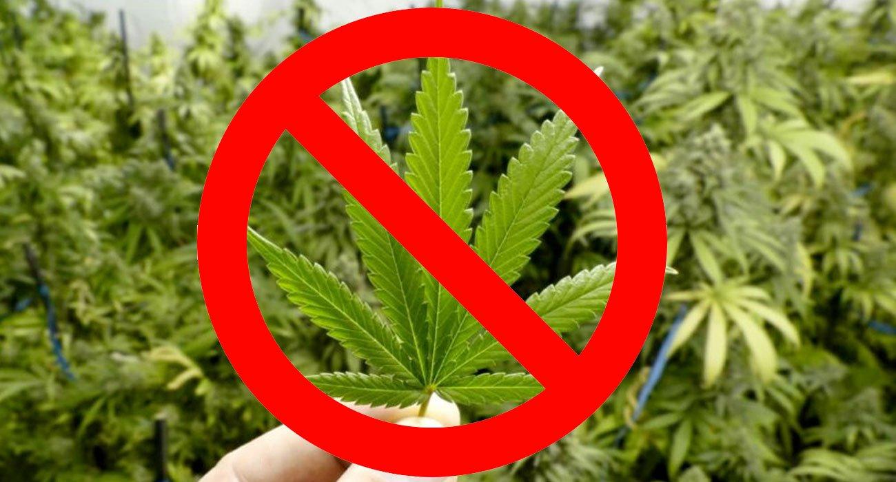 Cannabis Light: di nuovo illegale