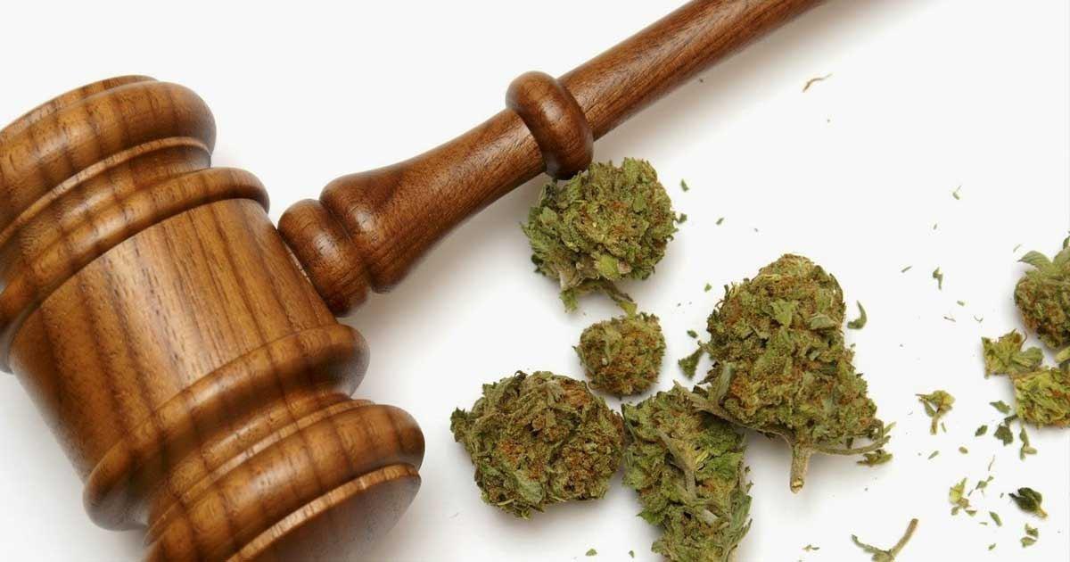 Cannabis light: approvato emendamento legge di bilancio
