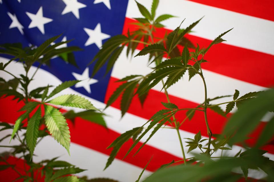 USA: nuovo Eldorado della cannabis