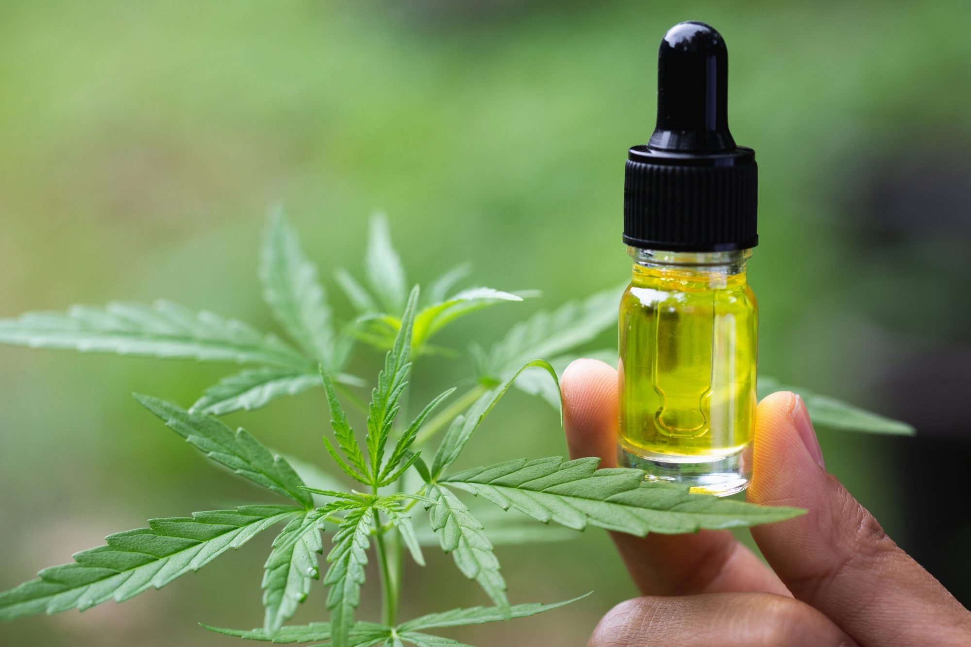 Olio di CBD e Olio di Cannabis: le differenze