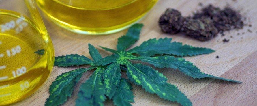 Scoperta nuova sostanza nella cannabis: è 33 volte più potente del THC