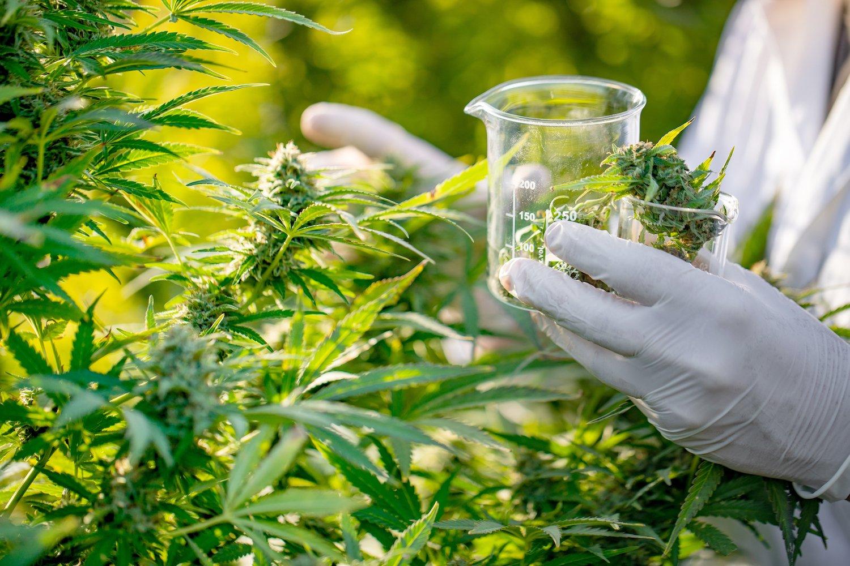 Università dove studiare il business della Cannabis