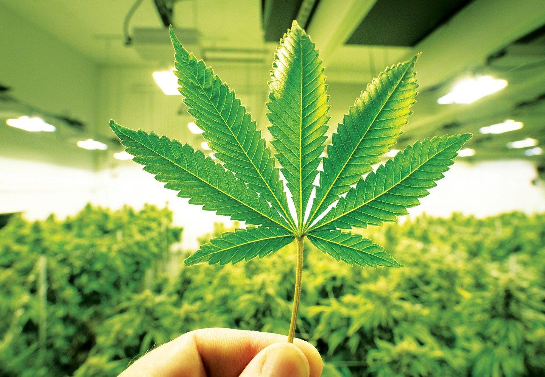 'Vendo cannabis legale, col Covid-19 sono finito come gli spacciatori'