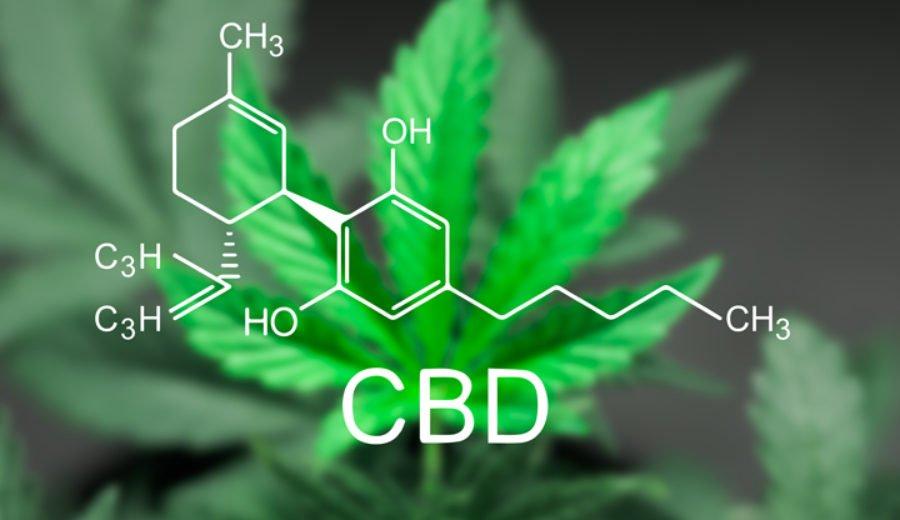 CBD per trattare i pazienti con dolori cronici