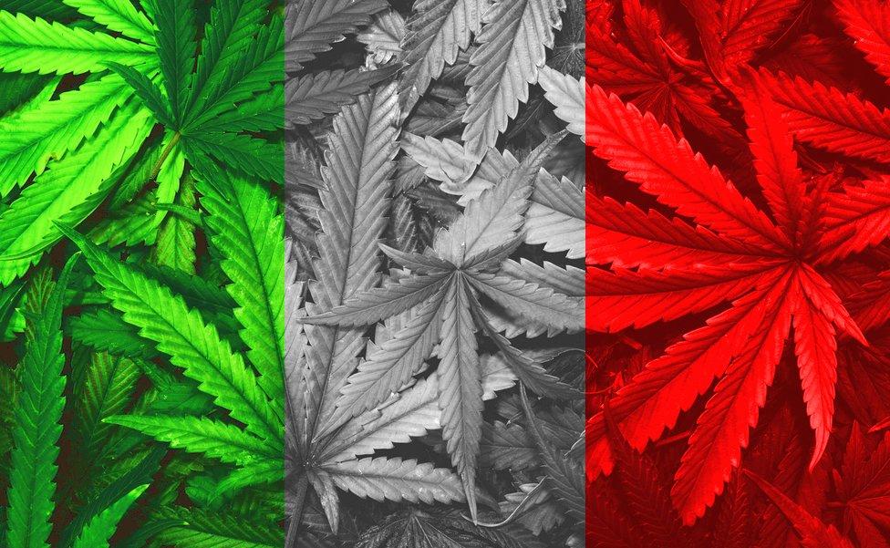 Licatini (M5S): Interrogazione per la legalizzazione della cannabis