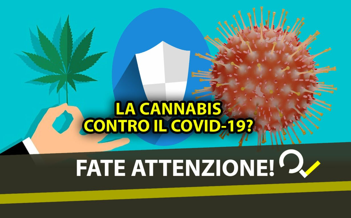 La cannabis potrebbe aiutare a prevenire l'infezione da Covid