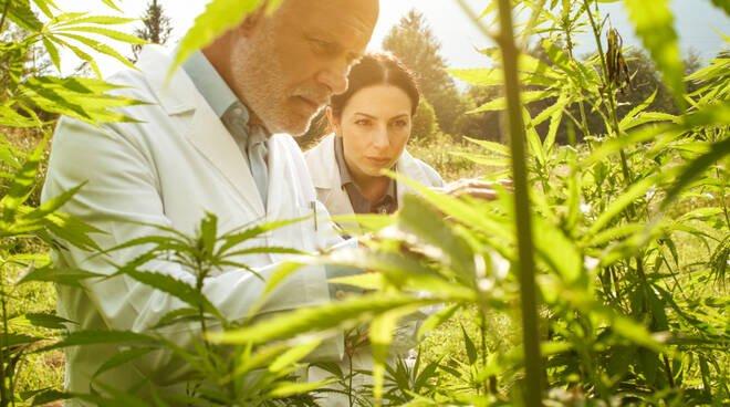 La cannabis può curare il cancro? Pro e contro per i pazienti tumorali