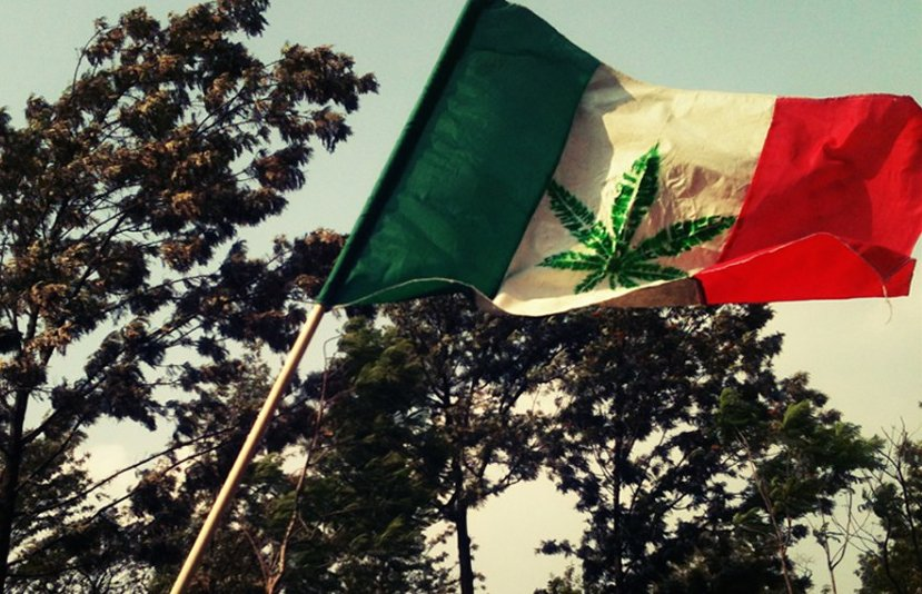 La legalizzazione della marijuana riduce i profitti dei cartelli messicani