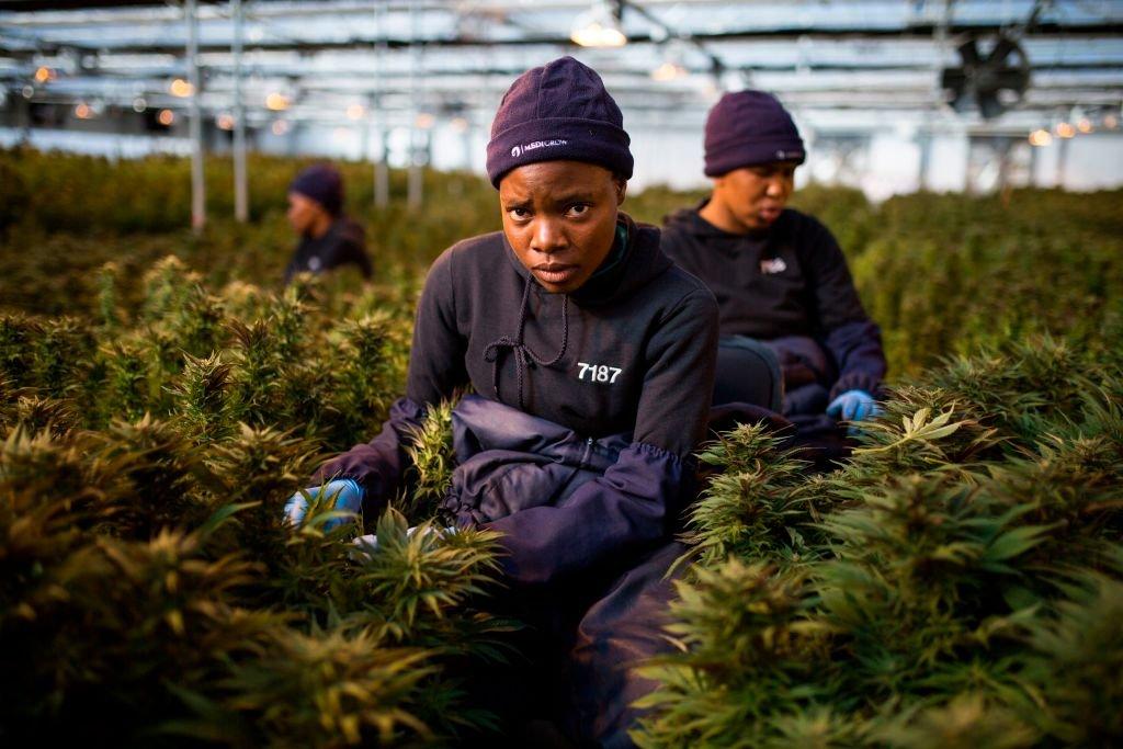 Anche in Africa vogliono darsi alla marijuana